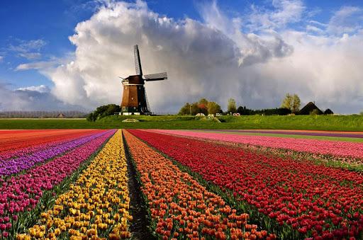 Незабутній Амстердам